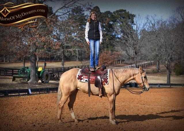 016-Sundance-AQHA-NRHA-Palomino-Quarter-Horse-Reiner-Reining-Horse-For-Sale