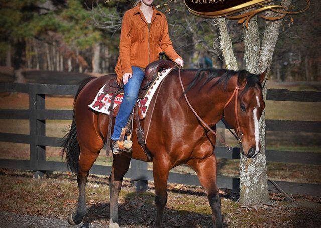 017-Harley-Bay-Quarter-Horse-Gelding-For-Sale