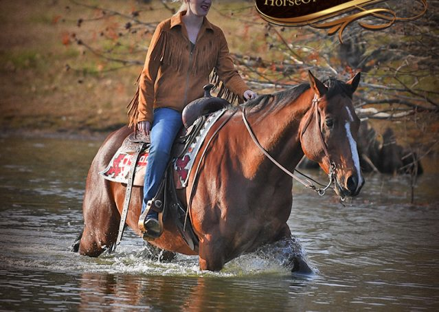 018-Harley-Bay-Quarter-Horse-Gelding-For-Sale