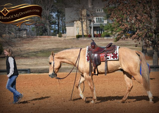 018-Sundance-AQHA-NRHA-Palomino-Quarter-Horse-Reiner-Reining-Horse-For-Sale