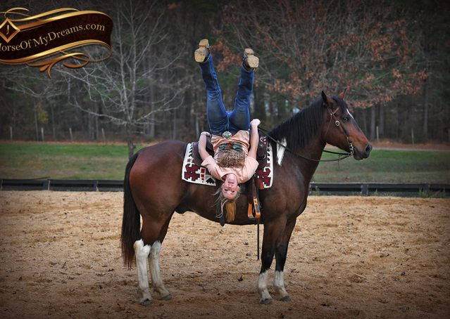 019-Carson=Bay-tobiano-gelding-for-sale