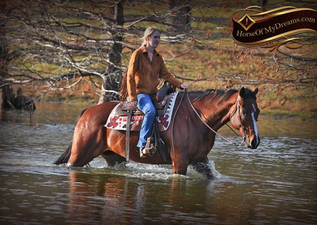 019-Harley-Bay-Quarter-Horse-Gelding-For-Sale