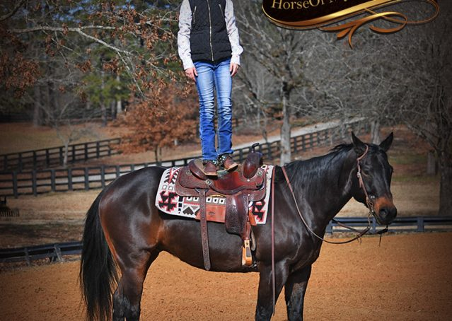 019-Hopper-Bay-AQHA-Gelding-For-Sale