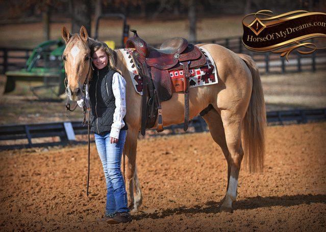 019-Sundance-AQHA-NRHA-Palomino-Quarter-Horse-Reiner-Reining-Horse-For-Sale
