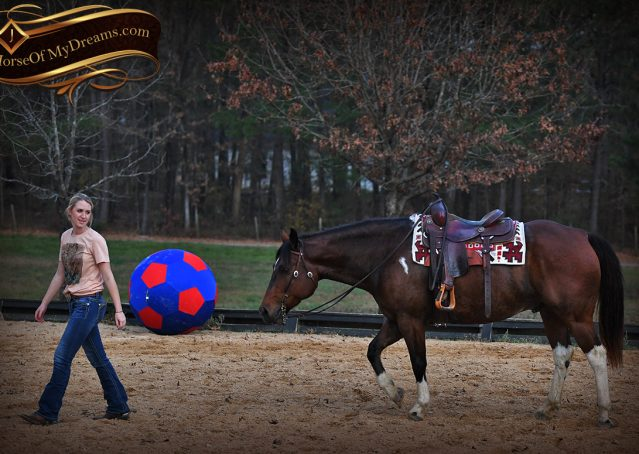 020-Carson=Bay-tobiano-gelding-for-sale