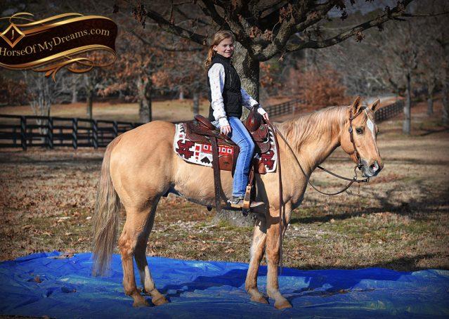 020-Sundance-AQHA-NRHA-Palomino-Quarter-Horse-Reiner-Reining-Horse-For-Sale