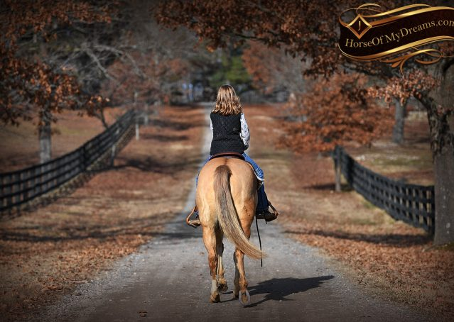021-Sundance-AQHA-NRHA-Palomino-Quarter-Horse-Reiner-Reining-Horse-For-Sale