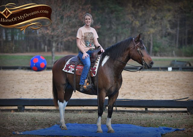 022-Carson=Bay-tobiano-gelding-for-sale
