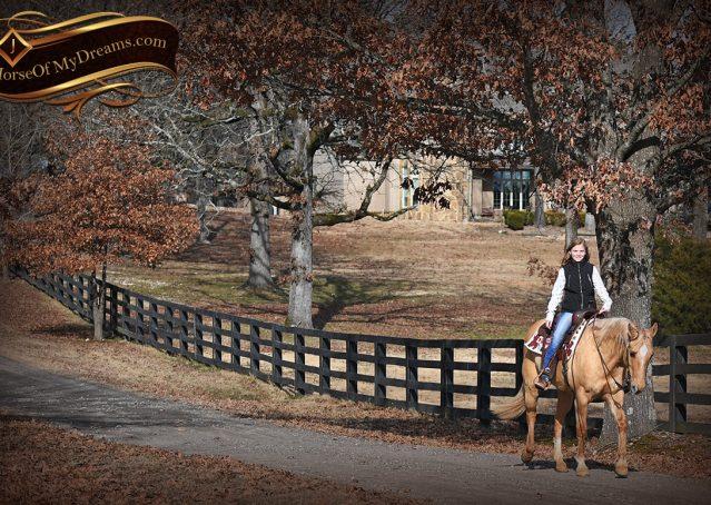 022-Sundance-AQHA-NRHA-Palomino-Quarter-Horse-Reiner-Reining-Horse-For-Sale