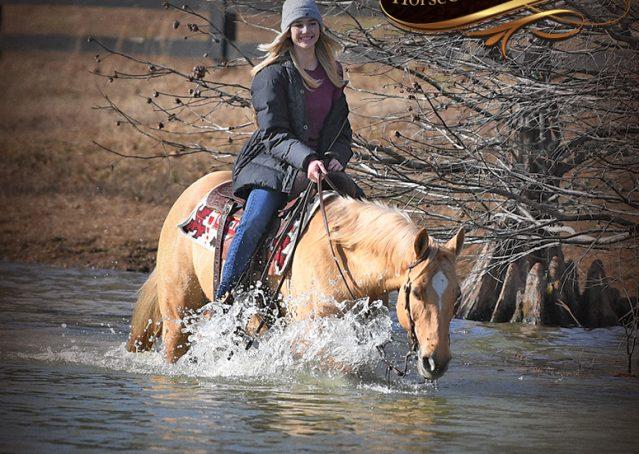 024-Sundance-AQHA-NRHA-Palomino-Quarter-Horse-Reiner-Reining-Horse-For-Sale