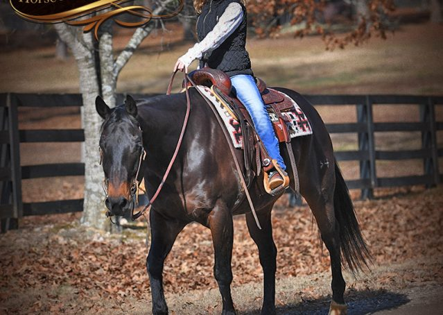 025-Hopper-Bay-AQHA-Gelding-For-Sale