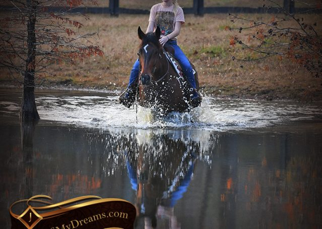 026-Carson=Bay-tobiano-gelding-for-sale