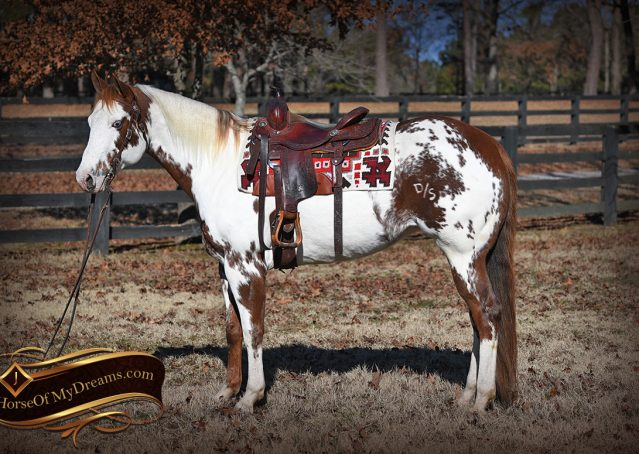 001-Ellie-Sorrel-Overo-Mounted-Shootin-Mare-Paint-For-Sale