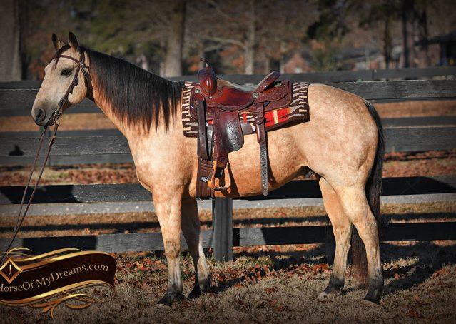 001-Oakley-Buckskin-Quarter-Horse-Gelding