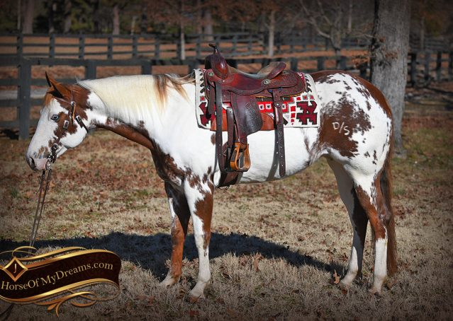002-Ellie-Sorrel-Overo-Mounted-Shootin-Mare-Paint-For-Sale