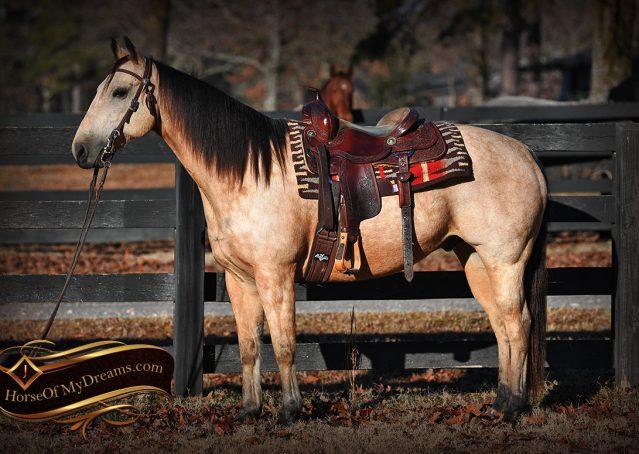 002-Oakley-Buckskin-Quarter-Horse-Gelding