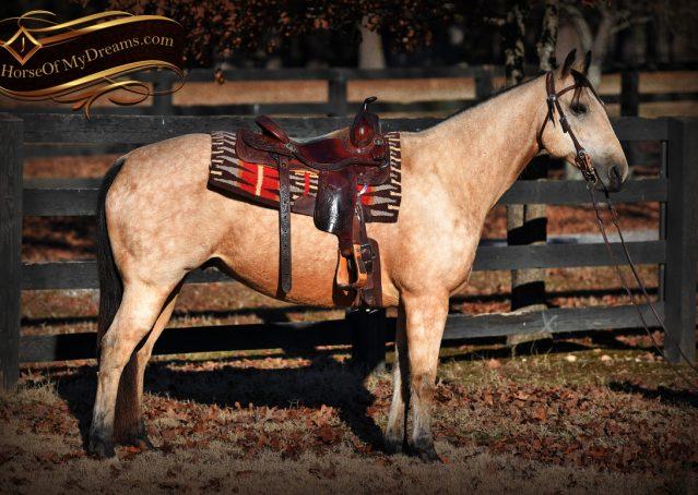 003-Oakley-Buckskin-Quarter-Horse-Gelding