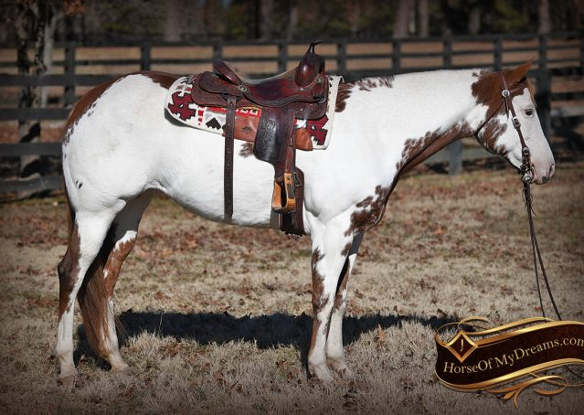 005-Ellie-Sorrel-Overo-Mounted-Shootin-Mare-Paint-For-Sale