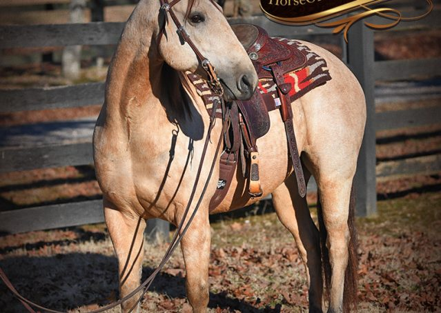 005-Oakley-Buckskin-Quarter-Horse-Gelding