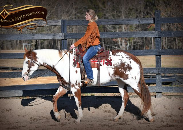 007-Ellie-Sorrel-Overo-Mounted-Shootin-Mare-Paint-For-Sale