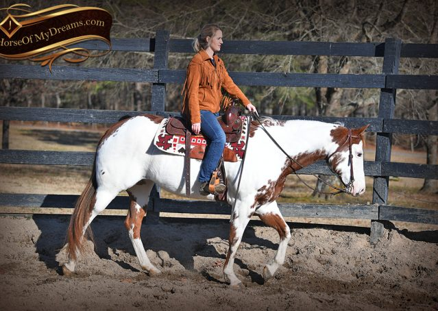 008-Ellie-Sorrel-Overo-Mounted-Shootin-Mare-Paint-For-Sale