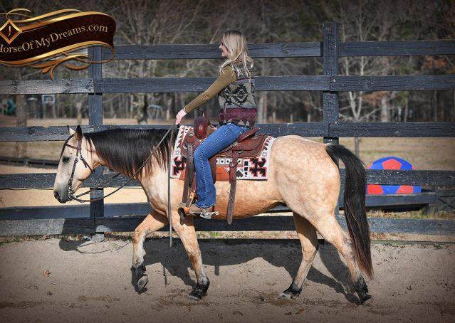 008-Oakley-Buckskin-Quarter-Horse-Gelding