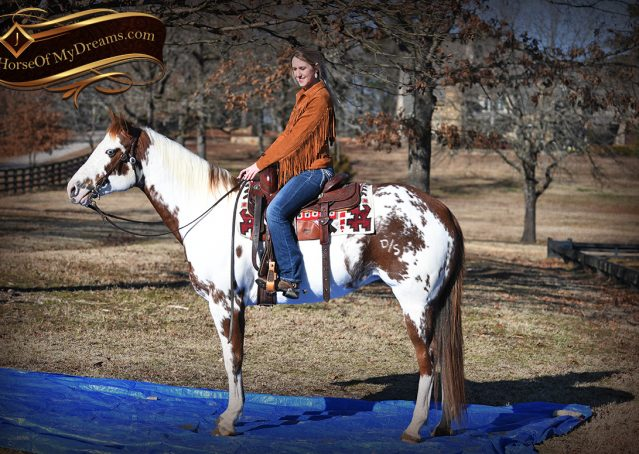 009-Ellie-Sorrel-Overo-Mounted-Shootin-Mare-Paint-For-Sale