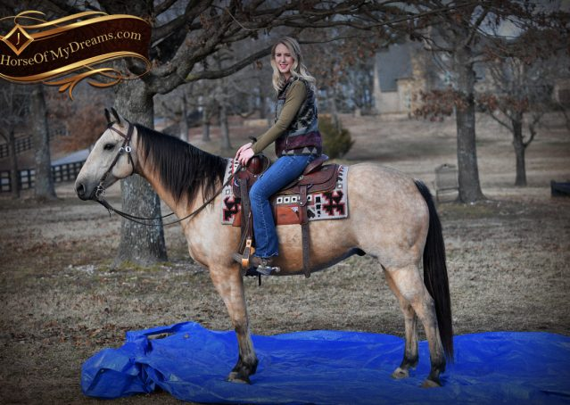 009-Oakley-Buckskin-Quarter-Horse-Gelding