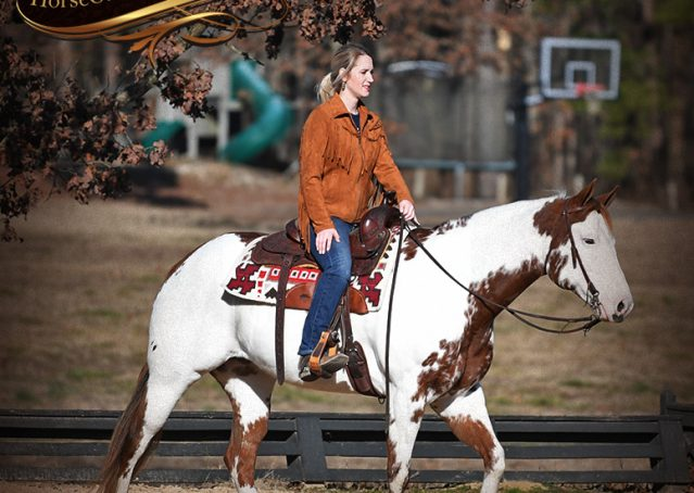 010-Ellie-Sorrel-Overo-Mounted-Shootin-Mare-Paint-For-Sale