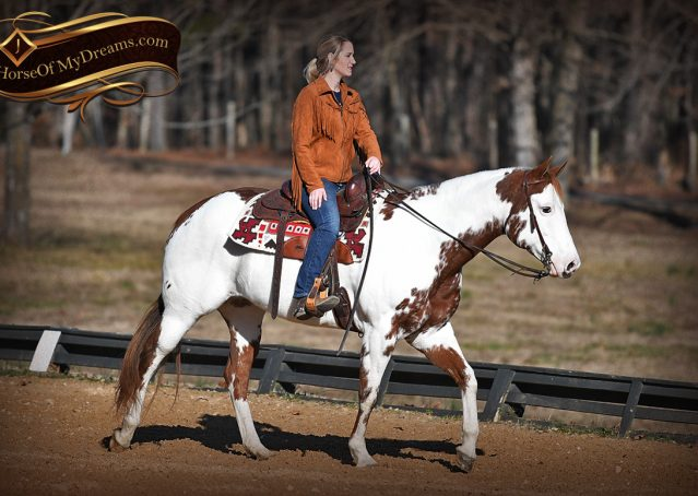 011-Ellie-Sorrel-Overo-Mounted-Shootin-Mare-Paint-For-Sale