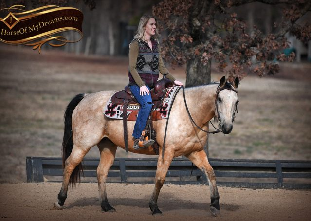 011-Oakley-Buckskin-Quarter-Horse-Gelding