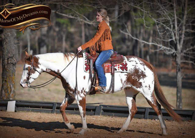 012-Ellie-Sorrel-Overo-Mounted-Shootin-Mare-Paint-For-Sale