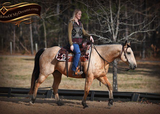 012-Oakley-Buckskin-Quarter-Horse-Gelding