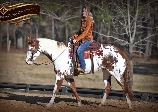 013-Ellie-Sorrel-Overo-Mounted-Shootin-Mare-Paint-For-Sale