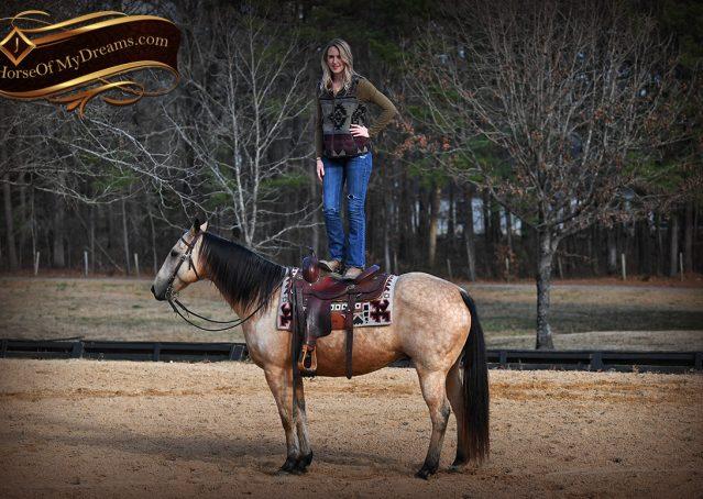 013-Oakley-Buckskin-Quarter-Horse-Gelding
