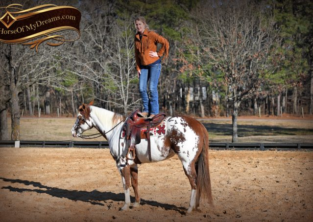 014-Ellie-Sorrel-Overo-Mounted-Shootin-Mare-Paint-For-Sale