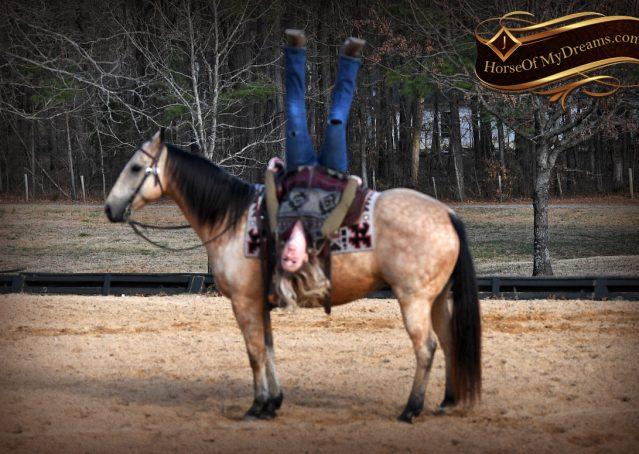 014-Oakley-Buckskin-Quarter-Horse-Gelding