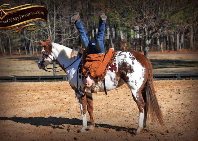 015-Ellie-Sorrel-Overo-Mounted-Shootin-Mare-Paint-For-Sale