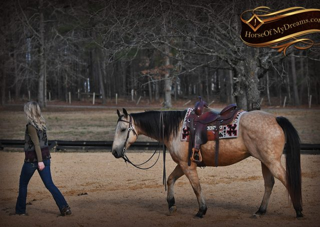 015-Oakley-Buckskin-Quarter-Horse-Gelding