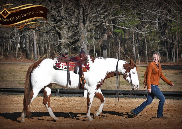 016-Ellie-Sorrel-Overo-Mounted-Shootin-Mare-Paint-For-Sale
