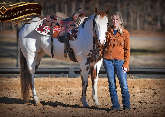 017-Ellie-Sorrel-Overo-Mounted-Shootin-Mare-Paint-For-Sale
