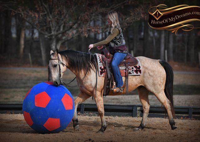 017-Oakley-Buckskin-Quarter-Horse-Gelding