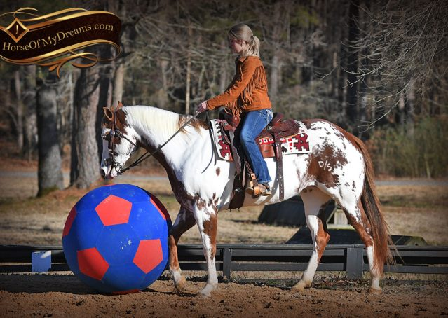 018-Ellie-Sorrel-Overo-Mounted-Shootin-Mare-Paint-For-Sale