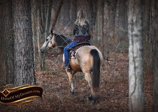 021-Oakley-Buckskin-Quarter-Horse-Gelding