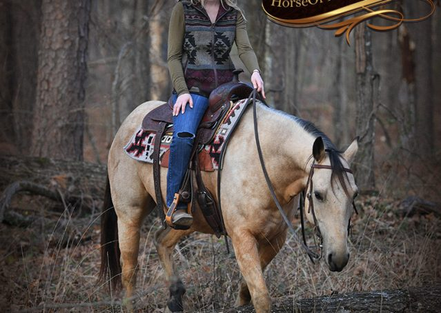 022-Oakley-Buckskin-Quarter-Horse-Gelding