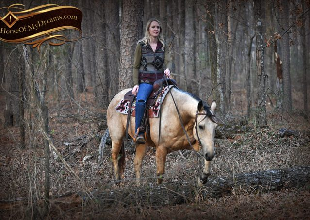 023-Oakley-Buckskin-Quarter-Horse-Gelding