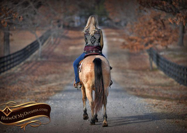 024-Oakley-Buckskin-Quarter-Horse-Gelding