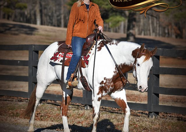 025-Ellie-Sorrel-Overo-Mounted-Shootin-Mare-Paint-For-Sale