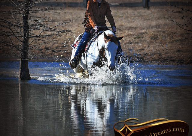 026-Ellie-Sorrel-Overo-Mounted-Shootin-Mare-Paint-For-Sale