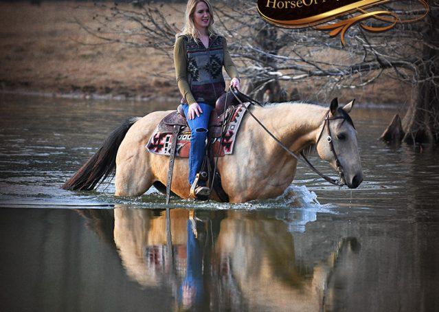 027-Oakley-Buckskin-Quarter-Horse-Gelding